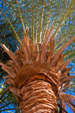Palm tree. Stem and leaves detail Stock Images