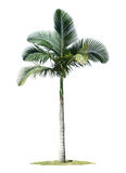 Palm tree. Highly detailed and coloured illustration Stock Photo