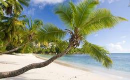 Palm tree. On a coastal line Stock Photo