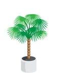 Palm_tree Foto de Stock Royalty Free