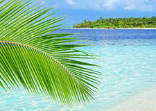 Palm tree. Tropical paradise with green palm tree on foreground Royalty Free Stock Photos