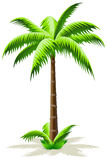Palm Tree. Green Palm Tree Icon with grass isolated on white Stock Photos