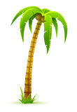Palm tree. Vector illustration, isolated on white background Stock Photo