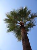 Palm Tree. In Monaco stock images