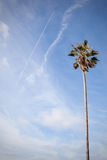 Palm tree. In San Diego stock photo