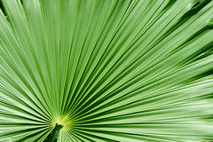 Free Palm Tree Royalty Free Stock Images - 14107689