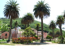 Palm tree. In Cucos thermae in Torres Vedras - Portugal Royalty Free Stock Photo