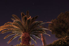 Palm tree. A night sky with palm trees in florida stock photography