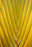 Palm tree. Closeup of a palm tree Royalty Free Stock Photos