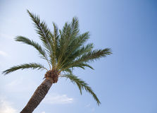 Palm tree. With blue sky background Stock Photo