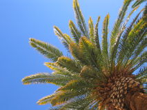 Free Palm Tree Stock Photography - 172702