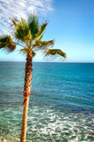 Palm Tree. Next to the Pacific Ocean in California stock photo
