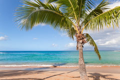 Palm tree. Paradise beach and palm tree with turquoise water Royalty Free Stock Images