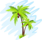 Palm tree. Coconut palm tree over blue background royalty free illustration