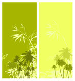 Palm tree. Tropical background with palm tree Stock Photo