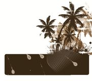 Palm tree. Tropical background with palm tree Royalty Free Stock Photos