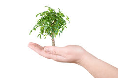 Palm and tree Royalty Free Stock Photos