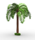 Palm-tree Royalty Free Stock Photos