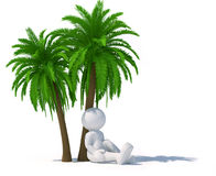 Palm-tree Royalty Free Stock Photography