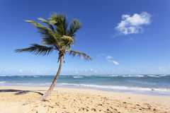 The palm tree Stock Photography