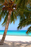Palm tree. A coconut palm on the beach and sea background Royalty Free Stock Photo