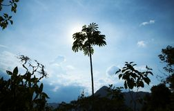 Palm-tree Royalty Free Stock Photos