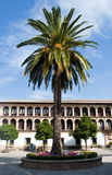 Palm Tree. On a roundabout with flowers, a building with balcons and windows in the background. Situated in the Spanish town of Ronda Royalty Free Stock Photos