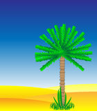 Palm tree Stock Photography
