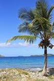 Palm Tree. Lonely palme tree at Cabrita Point, St. Thomas, U.S. Virgin Islands Royalty Free Stock Photo