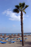 Palm tree. At the beach Stock Photos