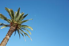 Palm tree. And blue sky background Royalty Free Stock Photo