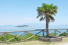 Palm tree. One palm tree close to the wooden fence near the sea. Mountains, green island, sea and blue sky on the background. Photo taken in Olympiada, Greece Royalty Free Stock Photos