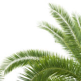 The palm tree Royalty Free Stock Images