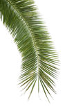 The palm tree Royalty Free Stock Photos