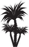 Palm tree. Isolated illustration of black palm tree over white Stock Photo