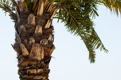 Palm tree. In the sun Royalty Free Stock Image