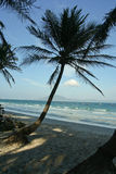Palm tree. Tropical beach with palm tree Royalty Free Stock Photography