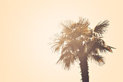 Palm tree. A palm tree on a sunny day Royalty Free Stock Photo