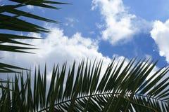 Palm tree stock photos