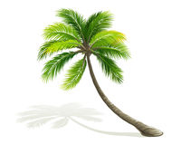 Free Palm Tree Stock Images - 30242034
