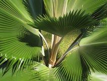 Free Palm Tree Royalty Free Stock Photos - 31327968