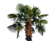 Free Palm Tree Stock Images - 3341804
