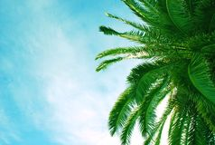 Palm tree. And blue sky Royalty Free Stock Photo