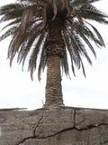 Palm tree. Growing into concrete Stock Photos