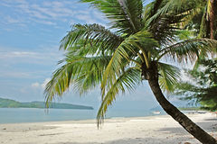 Palm tree. On sand beach Royalty Free Stock Photography