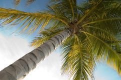 Free Palm Tree Stock Photography - 378772