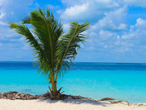 Palm tree. And blue sea Royalty Free Stock Photos