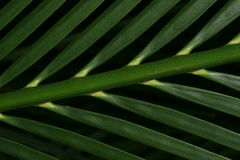 Palm tree. Branch (isolated stock images