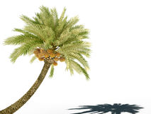 Palm tree 3d cg Stock Images