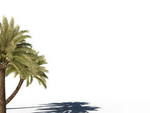 Palm tree 3d cg Stock Image